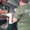 Volunteers work tirelessly to ensure safety of animals from Florenc...